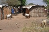 <p>Wioska Masajów</p>
