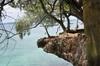 <p>Drzewo na skale</p>