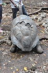 <p>Najstarszy żółw</p>