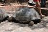 <p>Żółw</p>