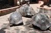 <p>Żółwie</p>