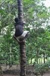 <p>Wejście na drzewo</p>