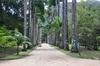 <p>Ogród Botaniczny Jardim Botanico</p>
